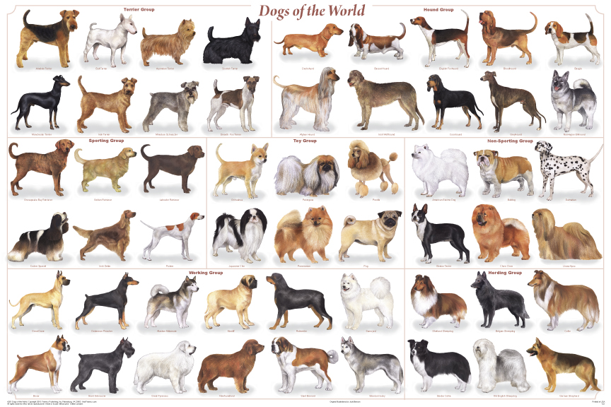 77257-dogs_of_the_world.jpg